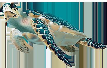 Turtle - Image 1