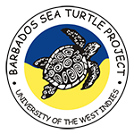 BARBADOS SEA TURTLE PROJECT - Partner of Atlantis Submarines Barbados
