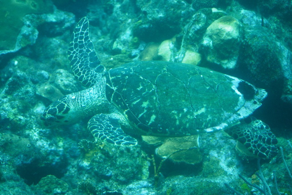 Underwater Adventures - Image 6